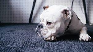 Pet insurance for dog bites