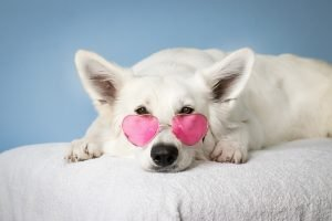 Pet insurance for dogs with sunglasses